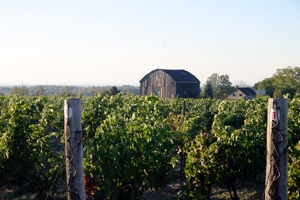 Cave Spring Winery - VQA Ontario Niagara Peninsula Growers and Vintners of Fine Wine