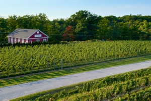 Cave Spring Winery - Vineyard Aerial