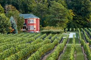 Cave Spring Winery - Vineyard and House