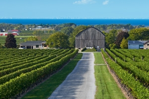 Cave Spring Winery - Vineyard and Barn